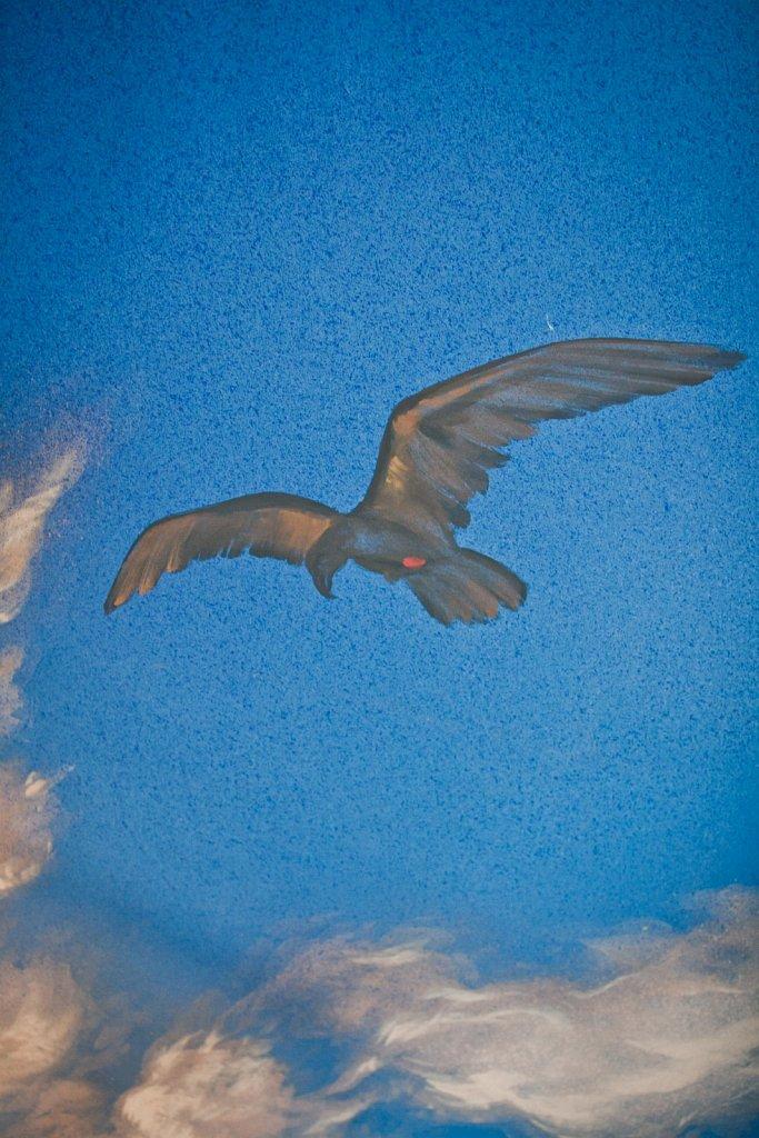 PHAEDRA SCHAUSPIELHAUS GRAZ 2012
